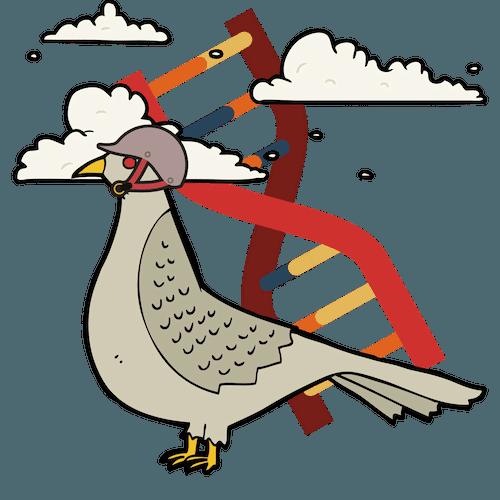 Genotipado de paloas