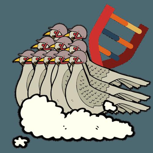 Escuadrón – Bono de 10 Genotipados de palomas